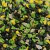 Frit Foliage